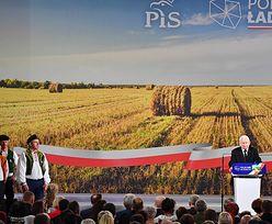 """PiS kusi rolników pieniędzmi. Lider Agrounii: """"Pustosłowie i nowomowa"""""""