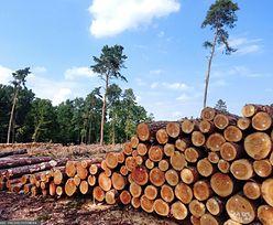 UE chce chronić lasy. A według polskich Lasów Państwowych taki pomysł to katastrofa