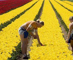 Niderlandy. 4,5 tysiąca euro grzywny i upublicznienie nazwy firmy - nowe kary za dyskryminację w pracy