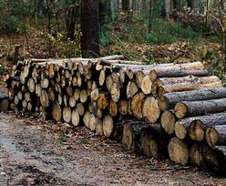 Drewno pożądane niczym złoto. W Niemczech go zabrakło