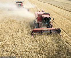 GUS. Wzrosły ceny skupu podstawowych produktów rolnych