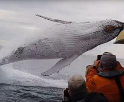 Wieloryb na widelcu. Japonia wznawia połowy