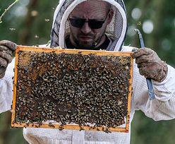 """Bruksela sypnie kasą na pszczelarzy. """"To ważna cześć unijnego sektora rolno-spożywczego"""""""
