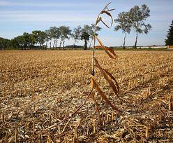 Groźba katastrofy ekologicznej, głodu i wojny. Druzgocący raport IPCC