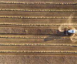 Rolnictwo podupada przez suszę. Gorzej mają Niemcy, Szwecja i Dania
