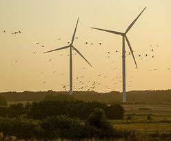 Ceny prądu. Energia elektryczna najtańsza od miesięcy. Wszystko dzięki wiatrakom
