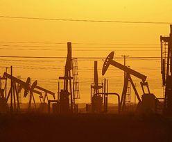 Ceny ropy naftowej. OPEC układa się z Rosją. Wydobycie ma szansę zostać zmniejszone