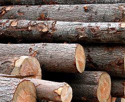 Na drewnie można zarobić. Ponad pół miliarda zysku Lasów Państwowych