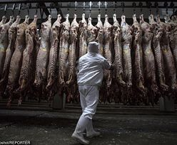 Afera z polskim mięsem. Czesi znoszą nadzwyczajne kontrole