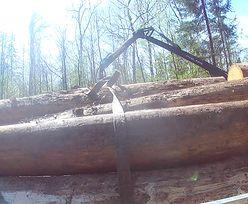 Pustoszeją lasy i puszcze. Alarmująca analiza WWF