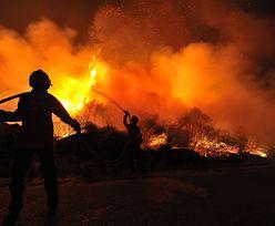 Pożary puszczy amazońskiej. To prawie jak koniec świata. Pół miliarda drzew zniknęło na zawsze