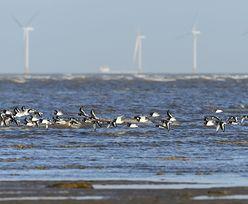 Francja stawia na energię z wiatru. Farma wiatrowa powstanie u wybrzeży Normandii