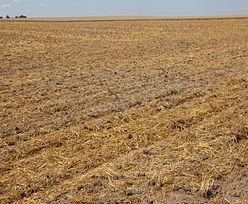 Susza w Polsce. Rolnicy załamują ręce