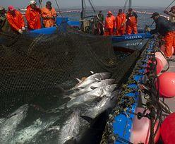 Zmiany klimatyczne duszą oceany. To może być koniec tuńczyków i innych gatunków