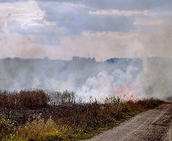 Wypalanie traw. Resort rolnictwa ostrzega: nawet 10 lat więzienia i utrata dopłat