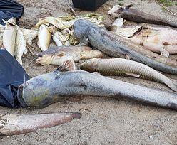 3 tony śniętych ryb. To może być początek końca Jeziora Koskowickiego