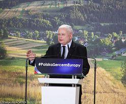 500 zł na krowę PiS nie sfinansuje z budżetu. Sięgnie po pieniądze z Unii