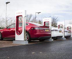 Tesla ma problem. Zakaz wycięcia lasu pod Berlinem
