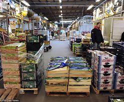 Susza dobija rolników. Ceny warzyw znów mogą być rekordowe. Pierwsza polska fasolka nawet po 40 zł za kg