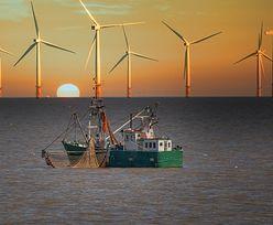 Morskie wiatraki coraz popularniejsze. Polska ma w tym zakresie duże plany