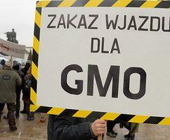 Polska strefą wolną od upraw GMO. Tego chce resort środowiska