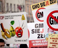 Polska wolna od GMO. Powstaną specjalne strefy pod uprawy modyfikowane