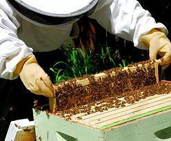 Pszczelarze idą na wojnę z koncernami chemicznymi