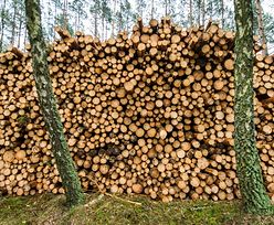 Nowe stawki za wycięcie drzewa. Ministerstwo wychodzi naprzeciw deweloperom