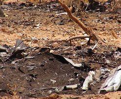 Katastrofa samolotu Air Algerie. Kiedy odczytają czarne skrzynki?