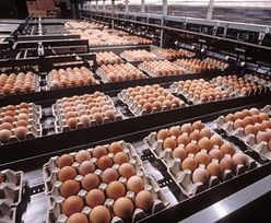Ukraińskie zagrożenie dla producentów jaj z Polski