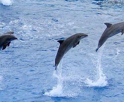 Delfiny mają najdłuższą pamięć spośród zwierząt