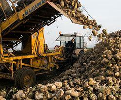 Rolnictwo w Polsce. KE chce pomagać producentom rolnym zdobywać nowe rynki zbytu