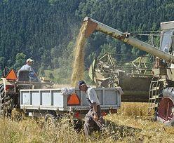 Rząd bierze się za szarą strefę w rolnictwie. Trzeba będzie płacić składki za pracowników sezonowych
