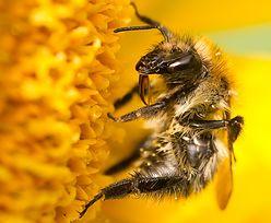 3 mln pszczół zginęły w ciągu jednej nocy!