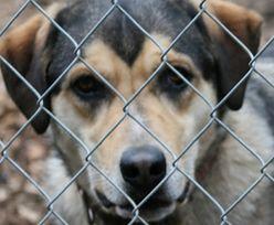 Prawa zwierząt. Senat pracuje nad ustawą dotyczącą bezdomnych psów i kotów