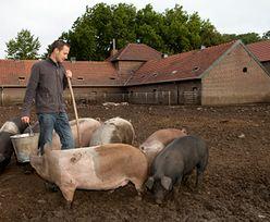 Ponad milion rolników złożyło do 15 maja wnioski o dopłaty bezpośrednie