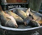 Wilbo będzie sprzedawać ryby na Białoruś