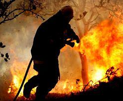 120 strażaków walczyło z pożarem traw w Londynie
