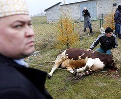 Zakaz uboju rytualnego kosztował polskich rolników miliard złotych rocznie