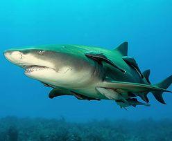 Atak rekina na wędkarza. Nie pierwszy raz