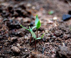 Jak wybrać odpowiednią ziemię do roślin?