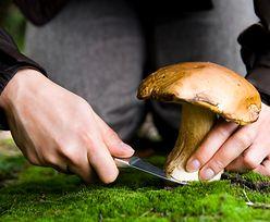 Zbierasz grzyby? O tym musisz pamiętać