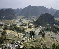 Chiny wykupują zagraniczne firmy z branży nasiennej. Świat powinien zacząć się martwić?
