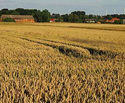 Ustawa o obrocie ziemią do zmiany. Nie będziesz musiał być rolnikiem, by kupić nawet hektar