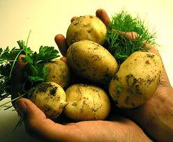 PepsiCo inwestuje w Polsce. Będzie produkować ziemniaki nowej odmiany