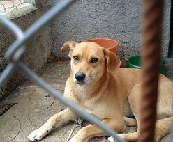 NIK: Ochrona zwierząt wymaga zmian w prawie
