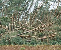 Ogromne straty Lasów Państwowych po nawałnicach. Leśnicy wciąż w terenie