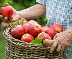 Producenci owoców załamują ręce. Pogoda nie sprzyja uprawom