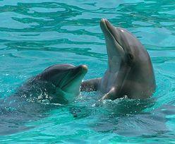 Ponad 400 martwych delfinów na plażach