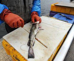 Bo dorsze są za chude. Polscy rybacy zaniepokojeni propozycją Brukseli